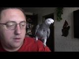 Диалог попугая Григория и его хозяина.